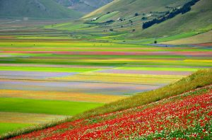 Umbria mountain flowers